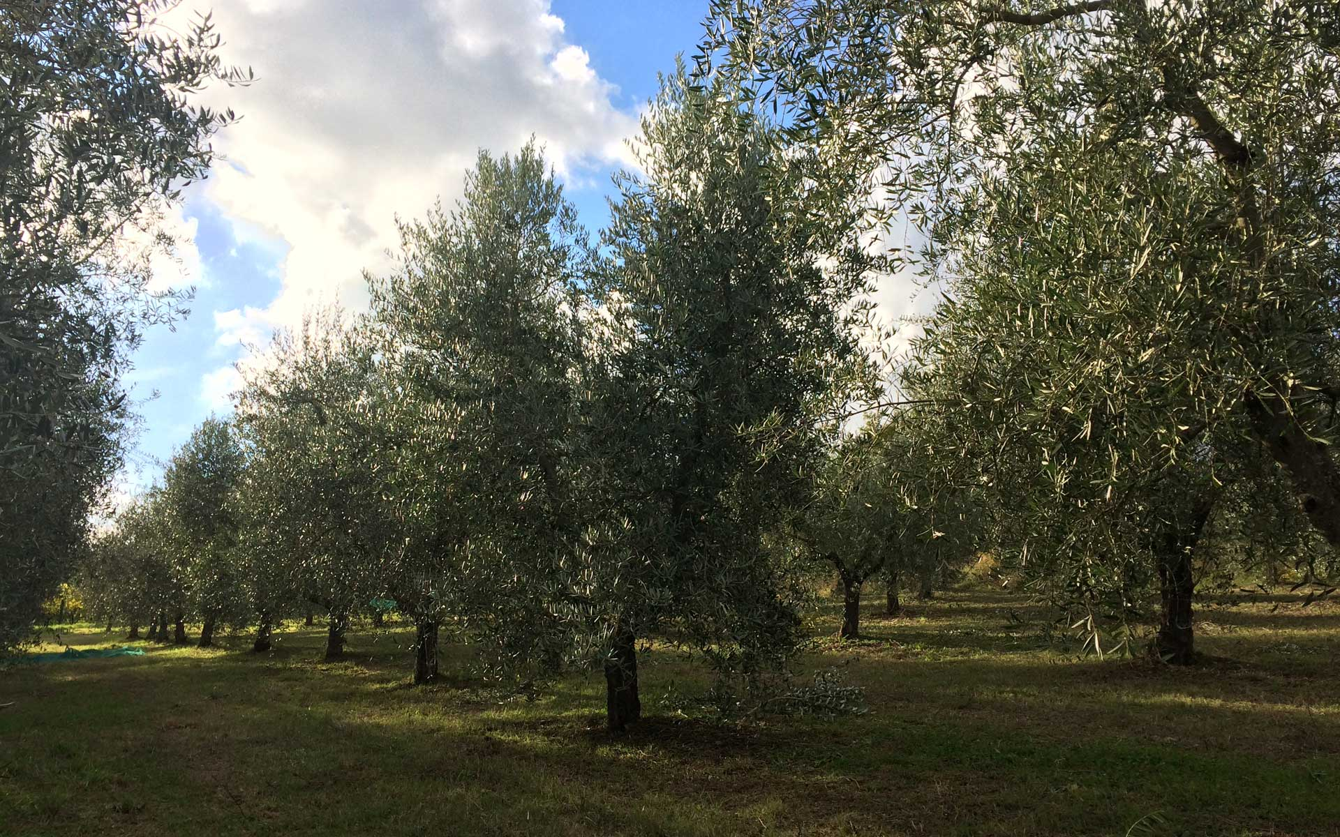 Feeling at home surrounded by Nature<br>in the heart of Italy